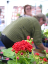 """Karin var lycklig som en lärka eftersom hon vunnit """"Best in show"""" med sin planta Antonnia Scammel!. Men plantan i framkant är nog en Bornholm"""