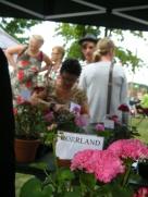 Vi som gillar Norrland