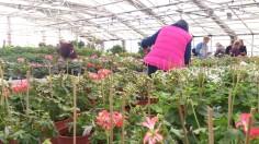 Man kan gå i timmar och titta på namnlappar och jämföra blommor