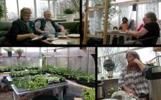 Vi började dagen med ett besök i växthusen och fika hos Karin Lund Hansen som är känd för sina Elnaryds-sorter