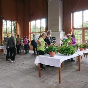 Sedan släpptes publiken in och fick se utställningsplantorna