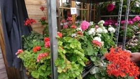 Gluggtorps plantor var jättestora och kostade nästan ingenting! #höstpriser