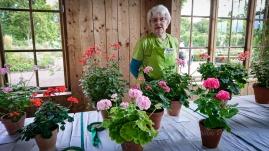 Vi tittar på form, symmetri och blommornas fördelning på plantan när vi bedömer, förklarade Anita