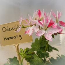 Odensjö Memory